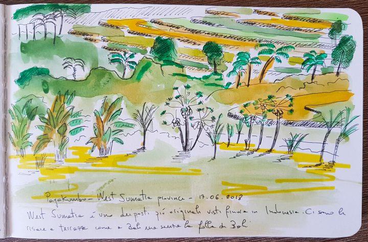Payakumbuh rice field sketch