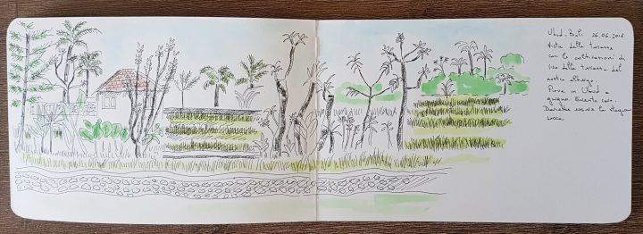 Ubud rice field sketch